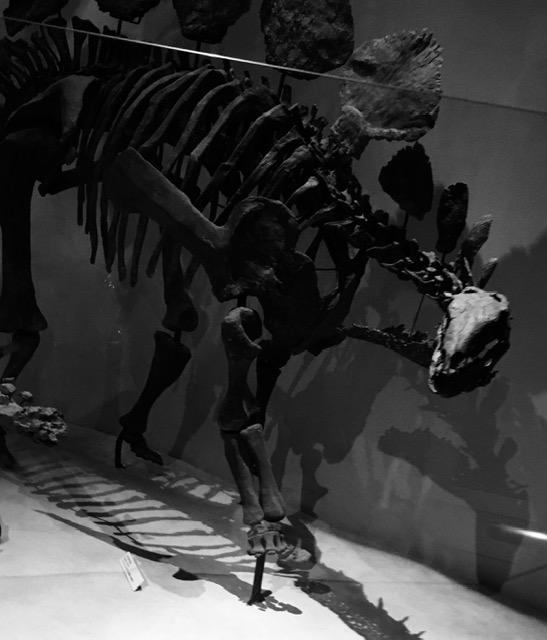 給料 ステゴザウルス リデザイン 最適化